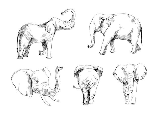 Эскиз слона. рисованной иллюстрации, изолированные на белом