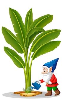 Elf irrigazione posizione albero di banana nel personaggio dei cartoni animati su sfondo bianco