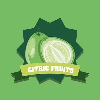 Emblem of citric fruits design with lemon