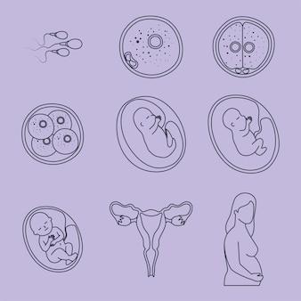 胚発生デザイン
