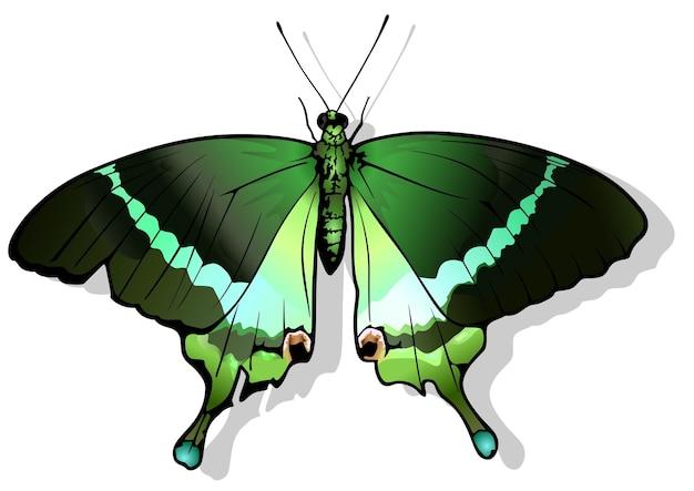 Изумрудная бабочка-парусник papilio palinurus