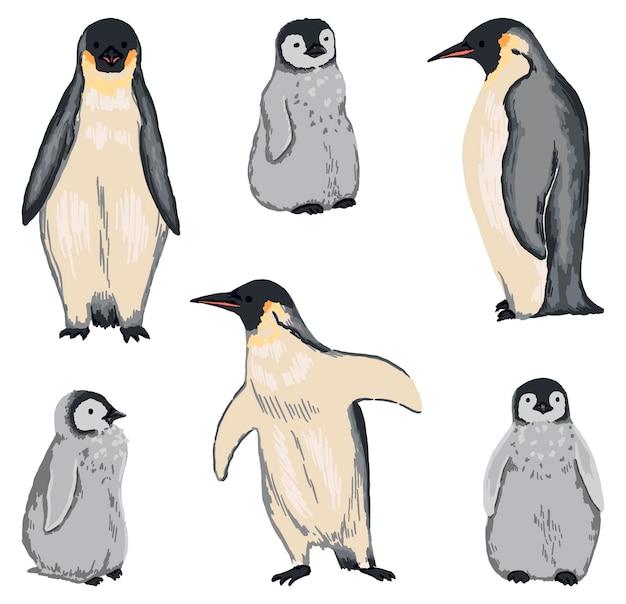 황제 펭귄 세트입니다. 성인과 병아리. 손으로 그린 벡터 북극 동물 그림의 컬렉션입니다. 흰색 절연 야생 조류의 컬러 드로잉입니다. 디자인, 장식 요소입니다.