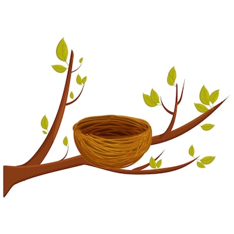 Empty bird nest from twigs on tree branch with leaves isolated on white background