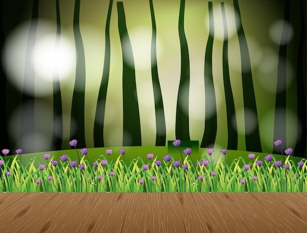 Scena di paesaggio naturale vuota con sfondo sfocato