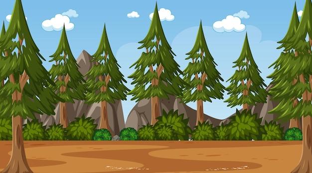 많은 소나무가 있는 빈 자연 공원 장면