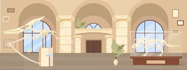 Empty paleontology museum hall flat color . dinosaur fossils exhibition. prehistoric skeletons. archeology exhibition 2d cartoon interior with showcases on background