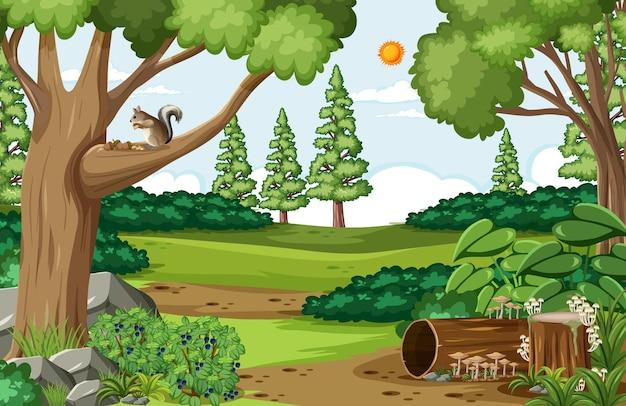 森の中の様々な木々のある空のシーン