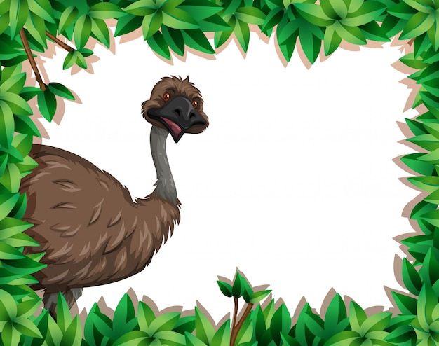 An emu in nature frame