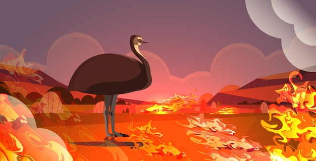 Emu or ostrich escaping from fires in australia animal dying in wildfire bushfire natural disaster concept intense orange flames horizontal