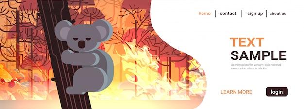 Угрожающий медведь коала на деревьях животные, умирающие в австралии лесной пожар развитие куста сухие леса горящие деревья концепция стихийного бедствия интенсивное оранжевое пламя горизонтально