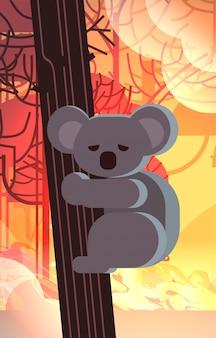 Подвергаемый опасности медведь коала на дереве животные, умирающие в лесном пожаре развитие огня сухие леса горящие деревья концепция стихийного бедствия интенсивный оранжевый огонь вертикальный
