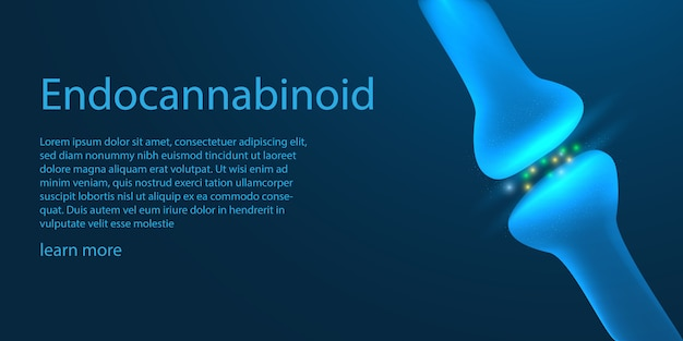 The endocannabinoid system template