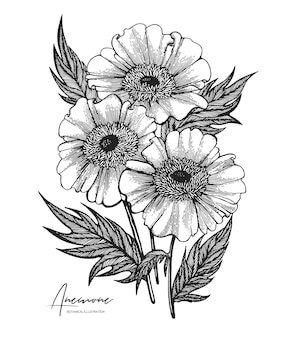 Engraved hand drawn illustrations of anemone all element isolated design elements for wedding invitations greeting cards wrapping paper cosmetics packaging labels tags quotes blogs posters