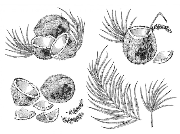 Гравированные иллюстрации набор кокосовых орехов, пальмовых листьев и коктейль