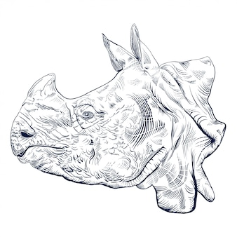 Engraving antique  of rhinoceros head isolated on white