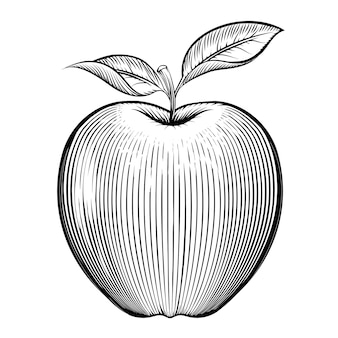 Engraving apple. vegetarian and nature, leaf and healthy.