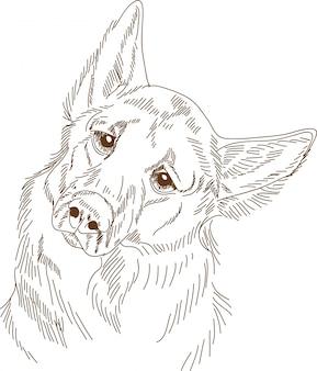 Engraving drawing of dog