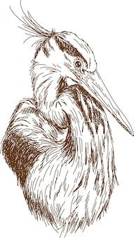 Engraving drawing of heron