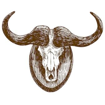 Engraving drawing illustration of buffalo skull