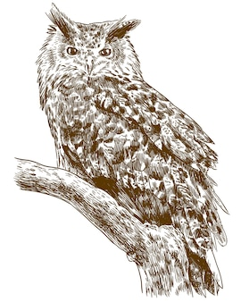 Engraving drawing illustration of eagle owl