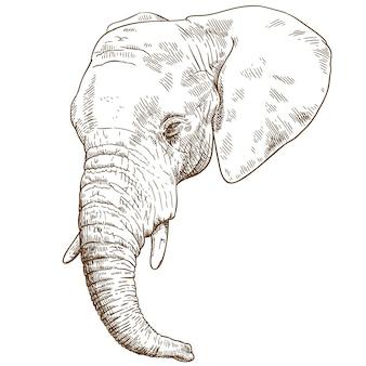 Engraving drawing illustration of elephant head