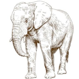 Гравюра рисунок иллюстрации большого слона