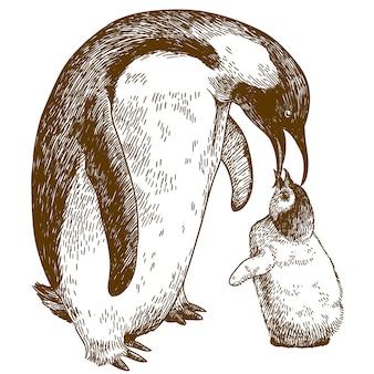 Гравюра с изображением императорского пингвина и птенца