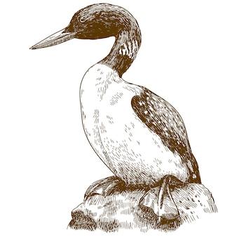 위대한 북부 loon의 조각 드로잉 그림