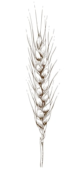 小麦の耳のイラストを彫刻