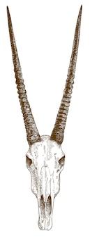 Engraving drawing illustration of oryx antelope