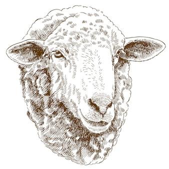 Engraving drawing illustration of sheep head