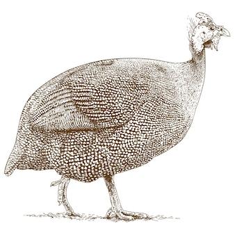 ホロホロ鳥の彫刻図面