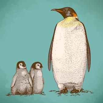 Engraving drawing of three king penguins