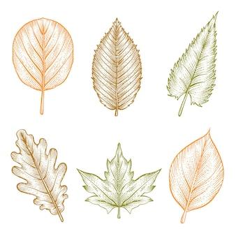 Гравюра рисованной коллекции осенних листьев