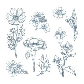 Гравюра рисованной коллекции цветов