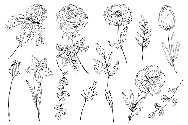 Engraving hand drawn flower collection