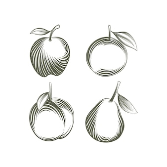 Engraving hand drawn fruit collection