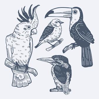 Гравюра рисованной коллекции тропических птиц