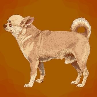 Engraving illustration of chihuahua dog