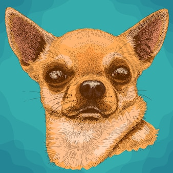 Engraving  illustration of chihuahua in retro style