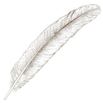 Engraving  illustration of feather