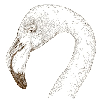 Engraving  illustration of flamingo head