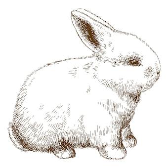 Engraving  illustration of fluffy bunny