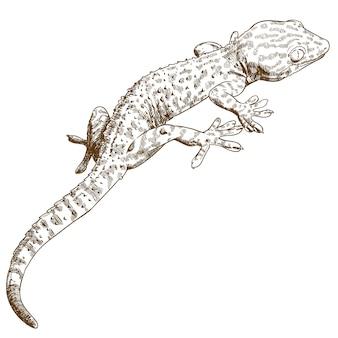Engraving illustration of gecko