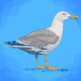 Engraving illustration of gull