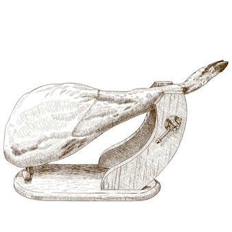 Engraving illustration of jamon