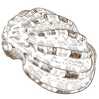 巻き貝の貝殻のイラストを彫刻