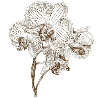 蘭の彫刻イラスト