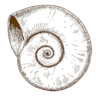 Иллюстрация гравировки спирали
