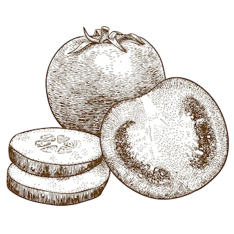 Engraving  illustration of tomato and cucumber slices